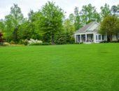 Красивый газон на приусадебном участке