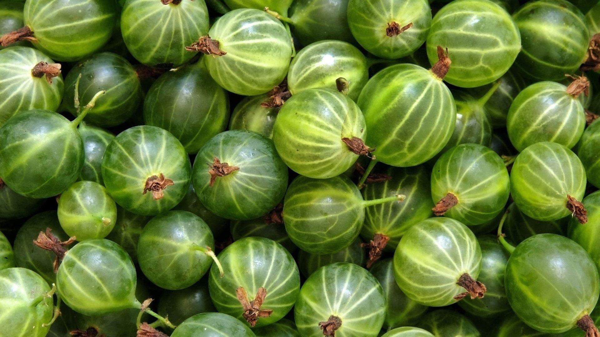 Агроном: Популярные бесшипные урожайные сорта крыжовника в 2019 году