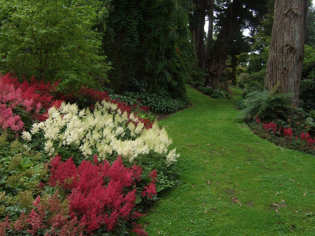 отдых цветы для тенистого сада фото продлится максимум год