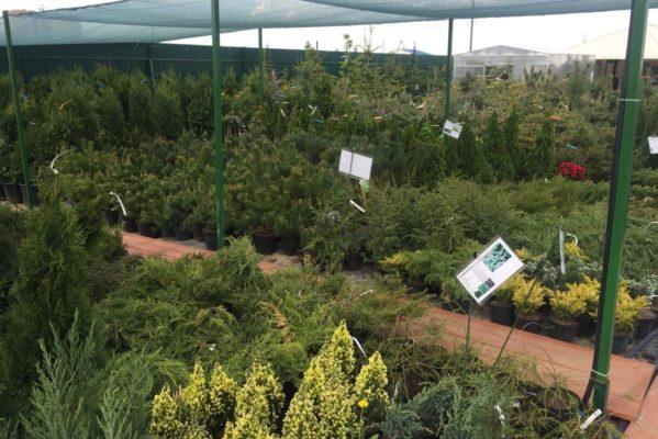 Питомник растений в Тверской области