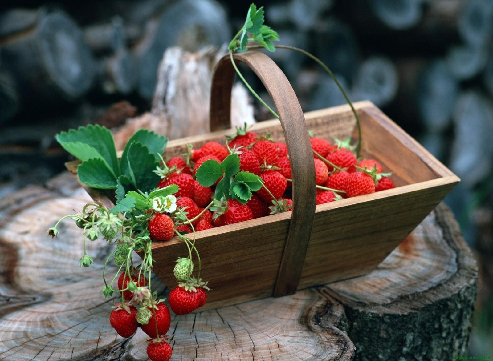 Можно вырастить клубнику в теплице