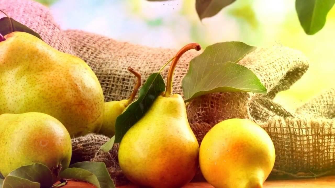 Пересадка груши осенью - как правильно пересадить