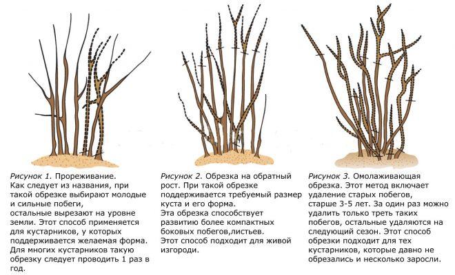 Способы обрезки кустарника