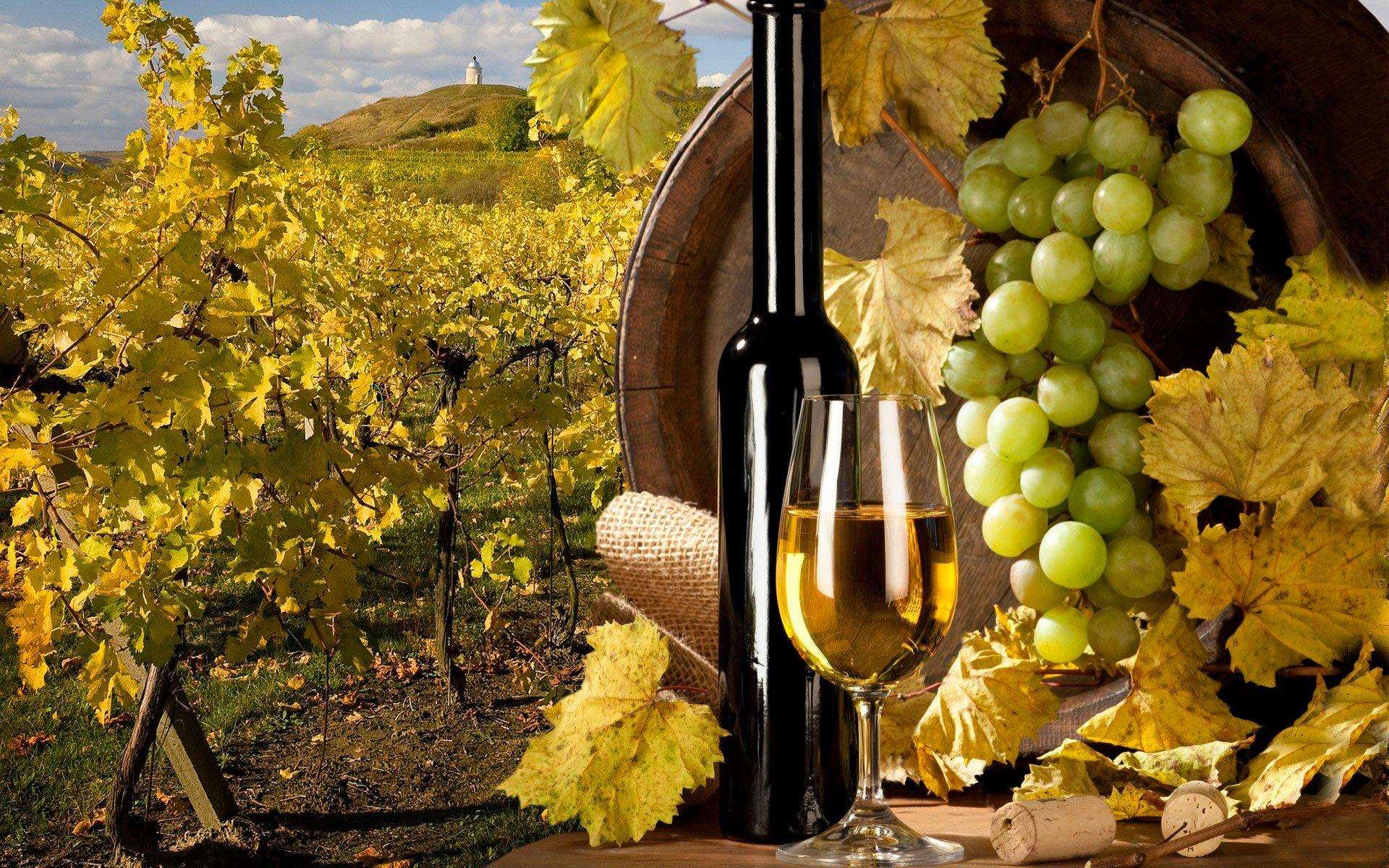 Белорусский виноград. Настало время селекции