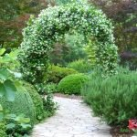 Арка из садового жасмина