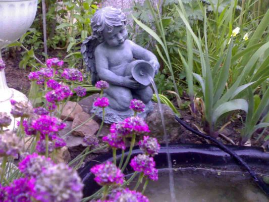 Армерия у фонтана на даче