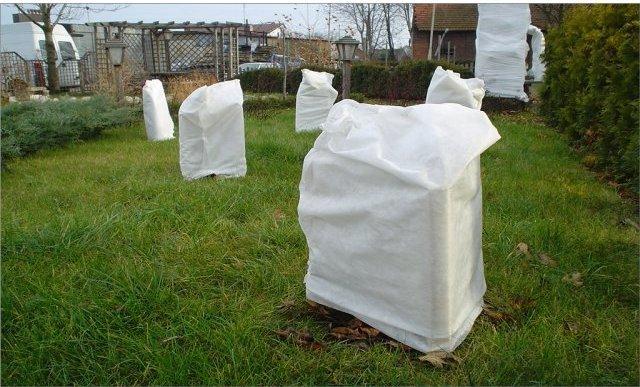 Саженцы кизила в агроволокне