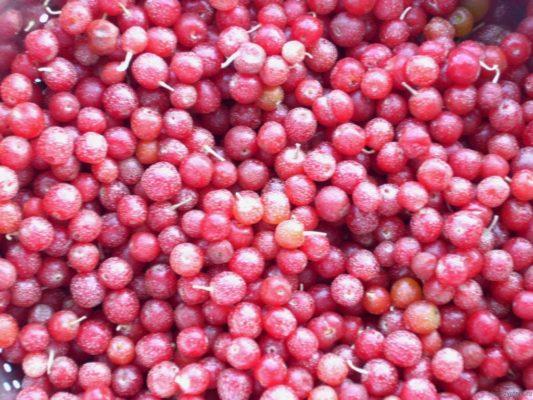 Урожай ягод шефердии