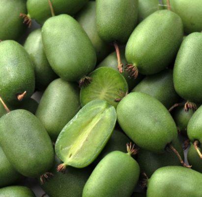 Плоды актинидии аргута Вити Киви