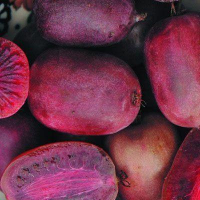 Плоды актинидии аргута Пурпурной садовой