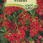 Сорт брусники Рубин