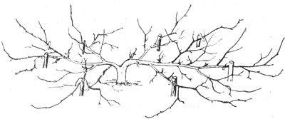 Схема формирования кизила в стланцевой форме
