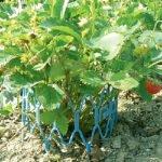 Опора-подставка под садовую землянику