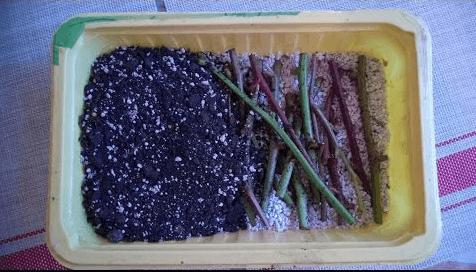 Размножение ежевики стеблевыми черенками