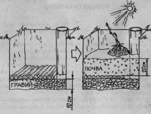 Умная яма для винограда