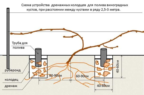 Трубы для полива винограда