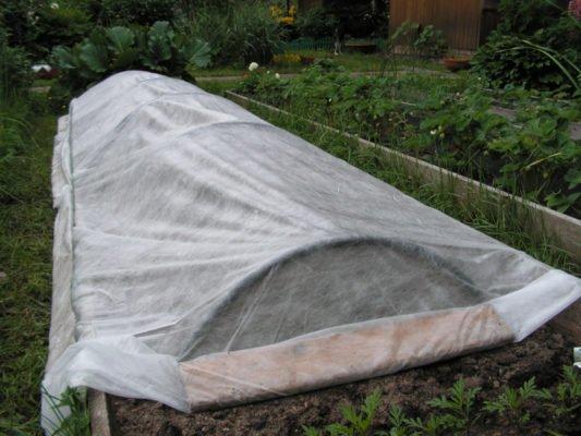 Укрытие из агроволокна на клубничной гряде
