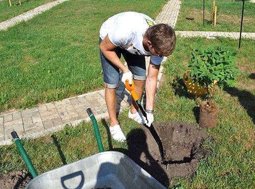 Подготовка посадочных ям