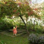 Дерево калины осенью