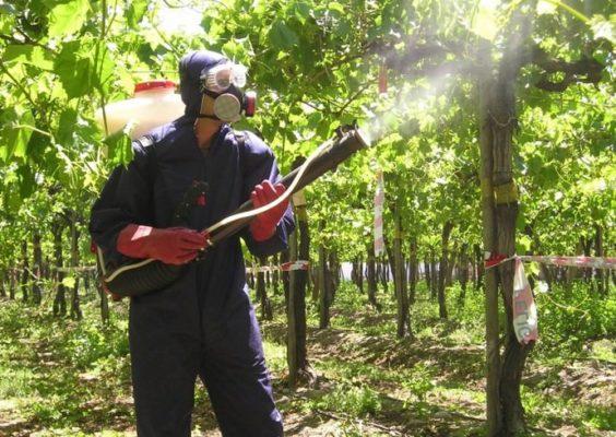 Опрыскивание винограда медным купоросом в защитной одежде