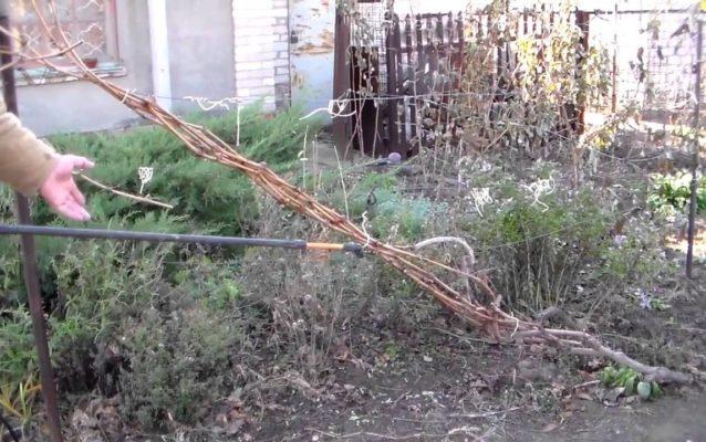 Опрыскивание винограда раствором медного купороса осенью