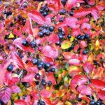 Арония черноплодная осенью