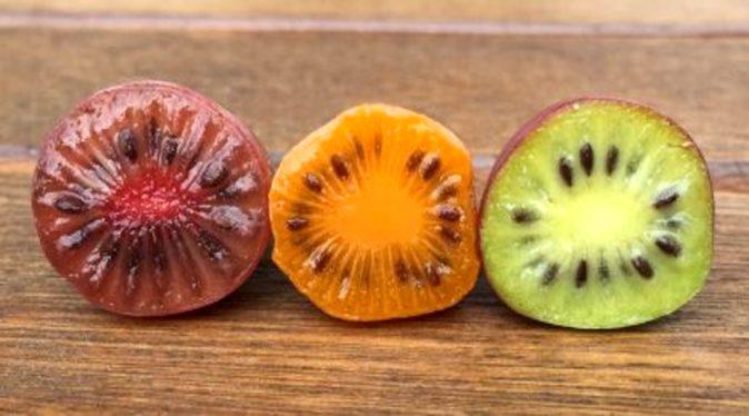 спелые ягоды актинидии