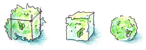 Формирование куба и шара из барбариса