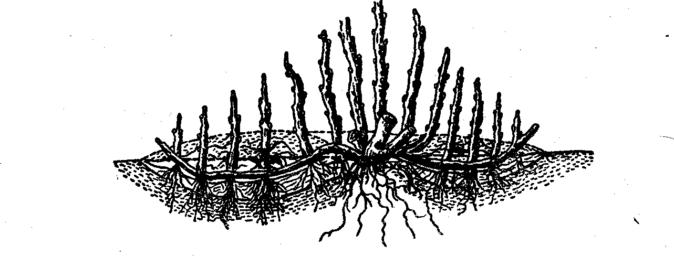 Горизонтальные отводки