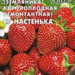Семена земляники Настенька