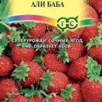 Семена земляники Али Баба