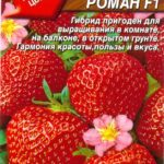 Семена земляники сорта Роман F1