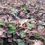 Прелая листва