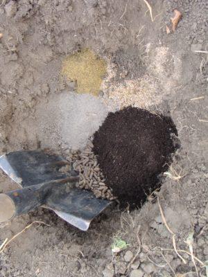 Внесение лопатой удобрений в посадочную яму