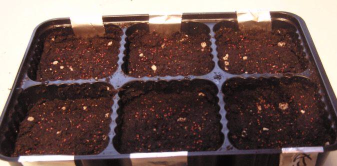 Посев семян клубники