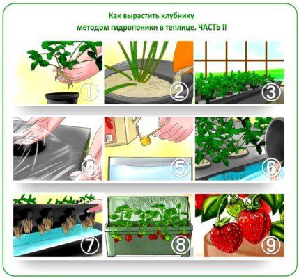 Выращивание клубники методом гидропоники: 2-й способ
