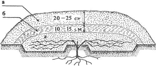Земляное укрытие для винограда