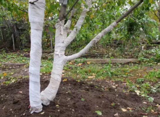 Ствол дерева, обёрнутый рулонным материалом