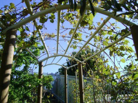 Необычная опора для винограда