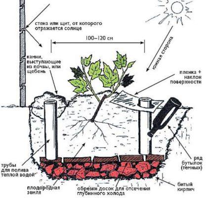 Схема посадки саженца с открытой корневой системой