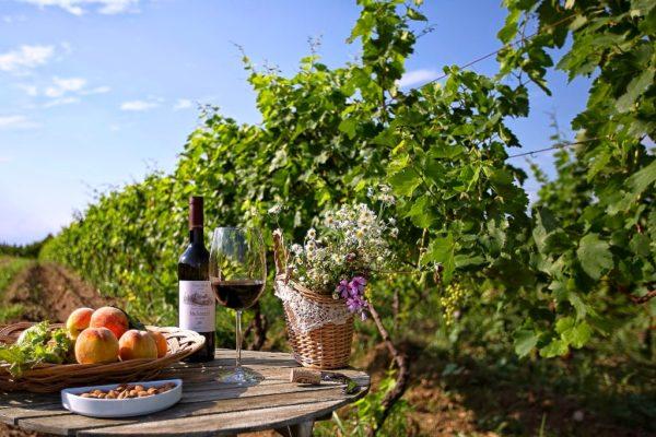 Виноградник и щедрый стол