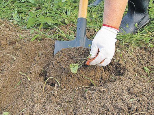 Удаление сорняков из почвы