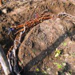 Укрываем виноград землей
