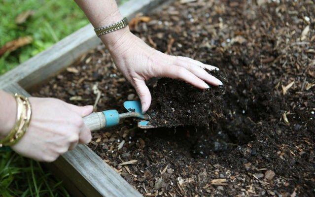 Подготовка почвы для посадки земляники