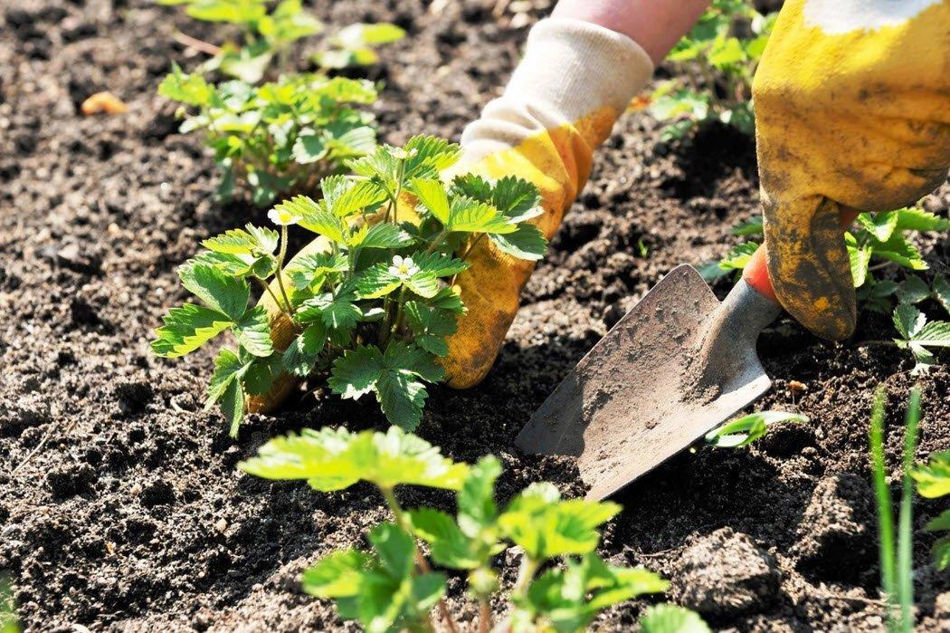 Днем рождения, картинки для детей работа в огороде весной высадка рассады