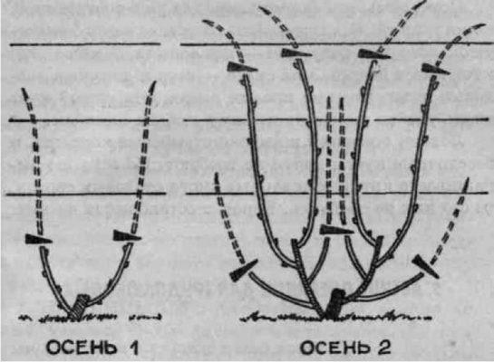Формирование четырёх плодовых звеньев