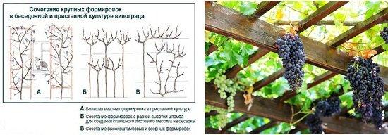 Крупная формировка винограда