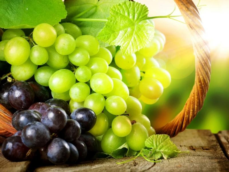 Виноград самые лучшие сорта