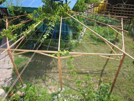 Опоры для подвязки винограда