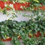 Выращивание клубники в ящиках